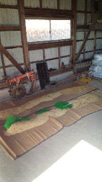 農作業07