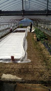 農作業11
