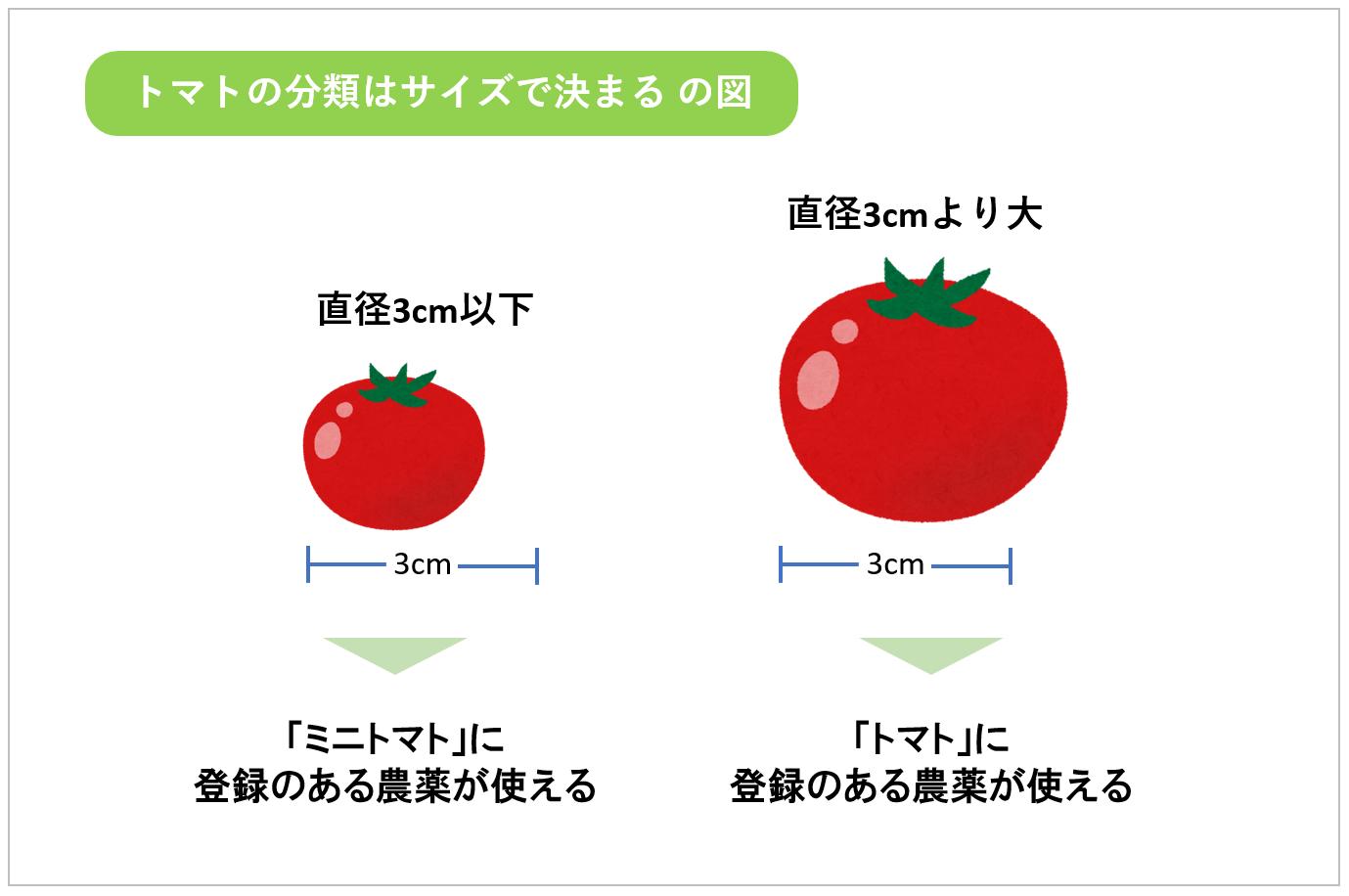 トマトの分類はサイズで決まる