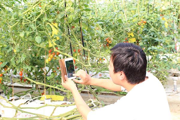 トマトを撮影