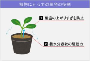 植物にとっての蒸発の役割