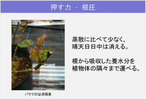 5-1植物体内の「流れ」_押す力