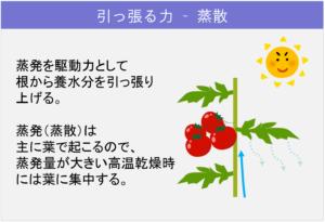 5-1植物体内の「流れ」_引っ張る力