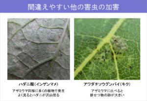 #33-3間違えやすい他の害虫の加害