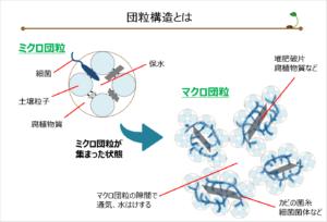 図10-腐植(団粒構造について)